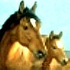Horse Racing – Flat Race